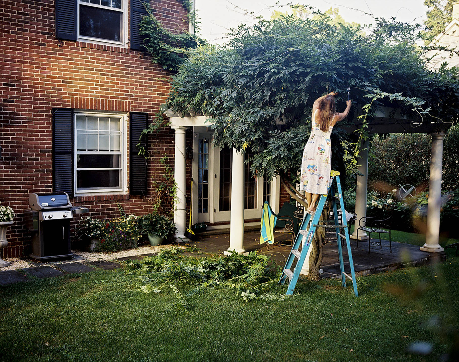 Trimming the Wisteria