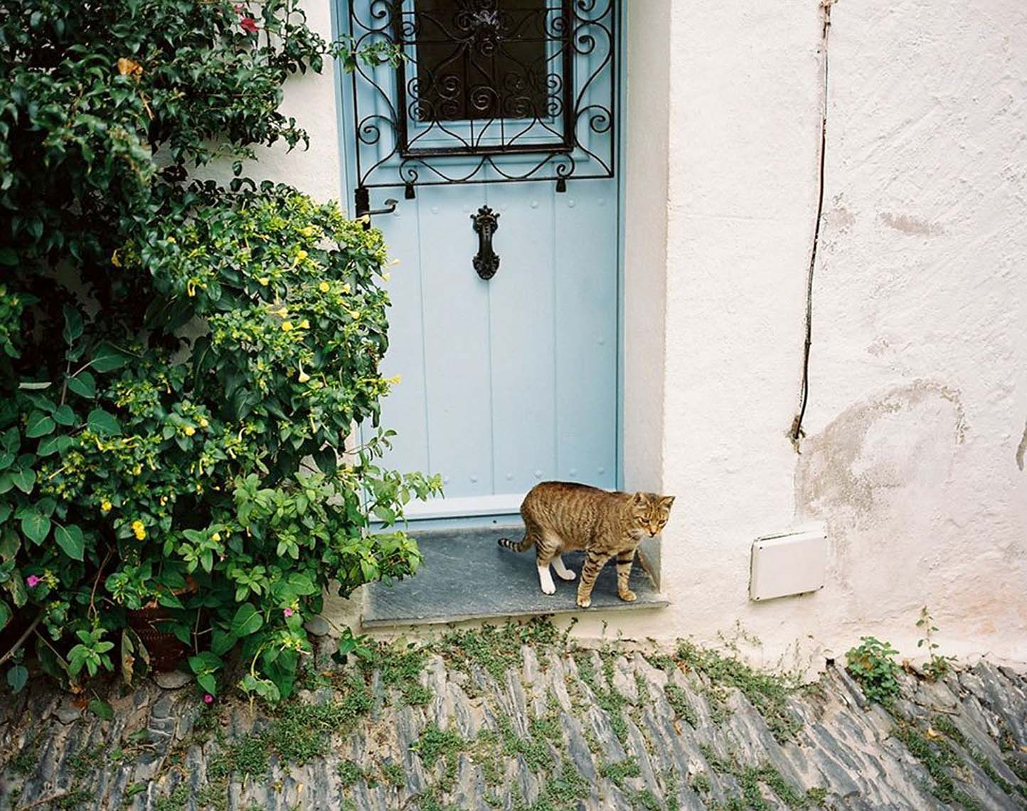 85_Cat-with-blue-door